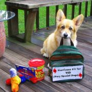 Hurricane kit for dogs